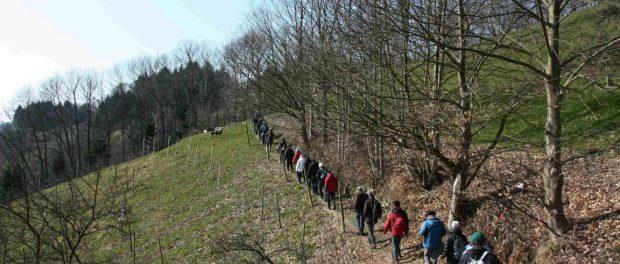 Auf dem Panoramaweg Lautenbach